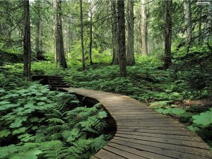 take-your-desktop-for-a-walk-through-the-forest-nature-picture-forest-wallpaper[1]